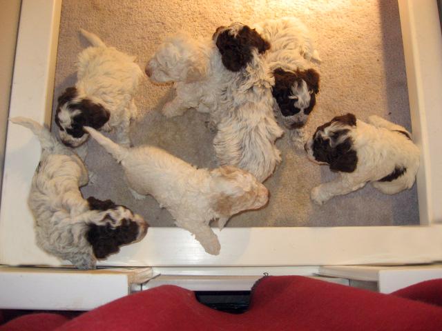 Amos-Donna_Puppies 003-1