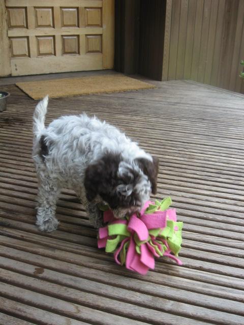 Amos-Donna_Puppies 008