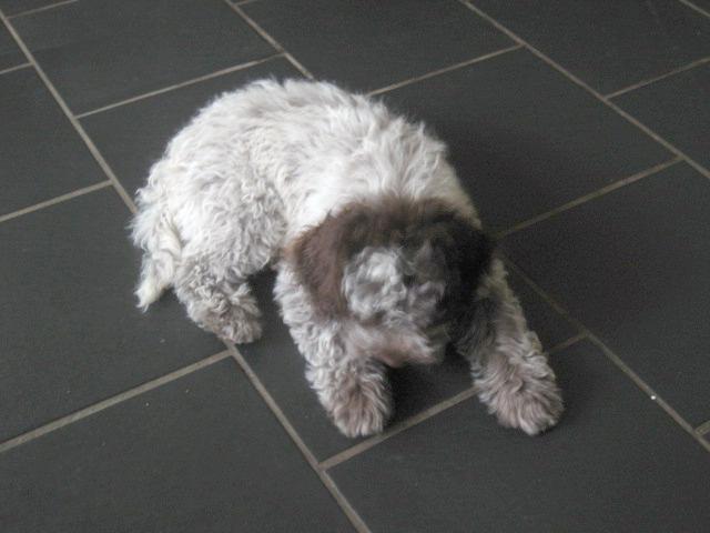 Amos-Donna_Puppies 023