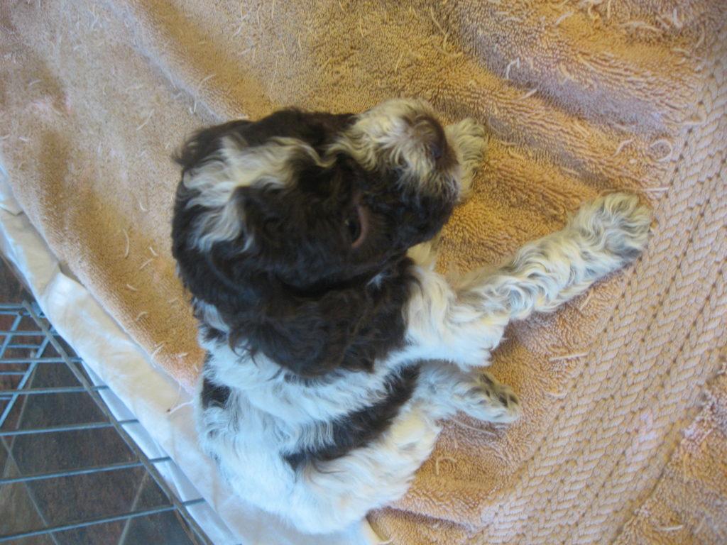 Cesca-Pups_1604_02.20-13