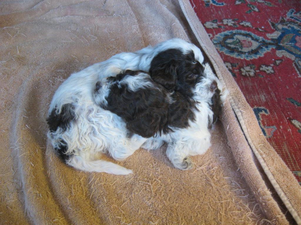 Cesca-Pups_1606_02.20-13