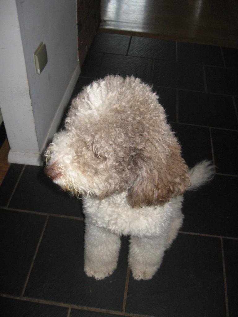 Cesca-Pups_1607_02.20-13