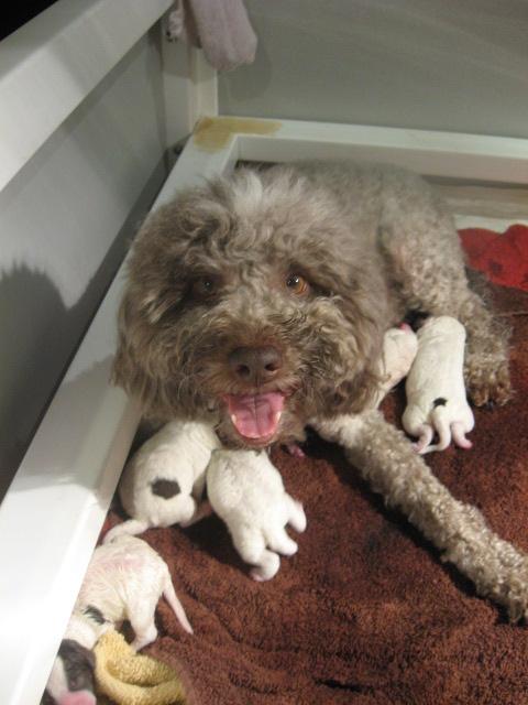 Donna-Amos_Puppies