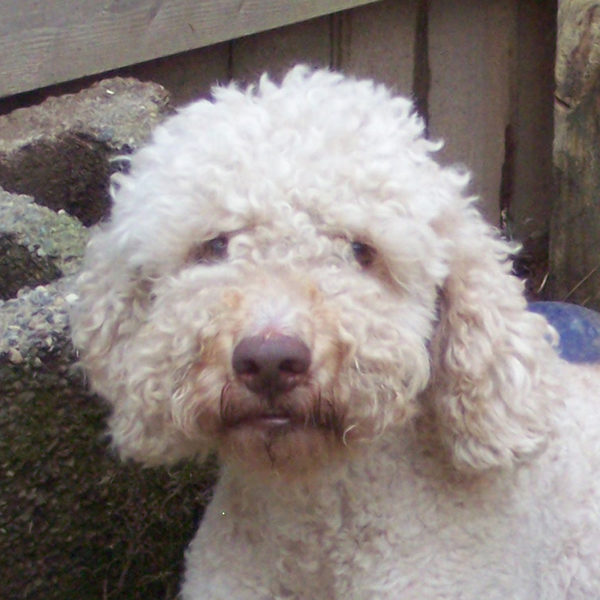 Sally-Lagotto_100_0710_SQ